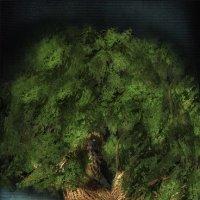 Дерево :: Татьяна Бойцова