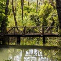 bridge :: Dmitry Ozersky