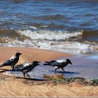 в морской водичке :: linnud