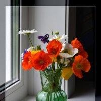 Полевые цветы :: Юрий Приходько
