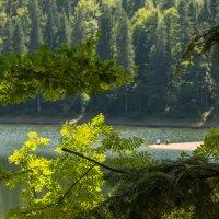 Озеро Синевир :: Сергей Форос