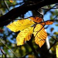 Скоро осень :: Ольга Голубева