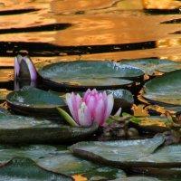В золотой воде :: Marina Timoveewa