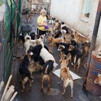 Будни приюта бездомных собак :: Анатолий Тимофеев
