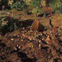 Картофель и солнце :: Николай Филоненко