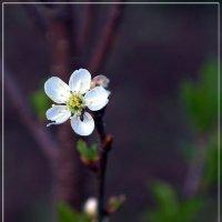 Стрекоза и муравей :: muh5257