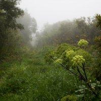 Дорога в лесу :: Sergey Apinis