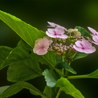 Цветы Московских оранжерей. :: Эдуард Пиолий