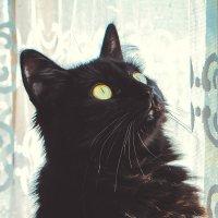 Муха за мухой :: Елизавета Кондакова