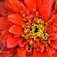 Flower :: Анастасия Фокс