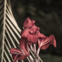 Цветок :: Никита Иванов