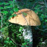 """Как говорят: """"У каждого грибника - свои грибы""""!!! Этот - мой!!! :: Наталья Пендюк Пендюк"""