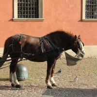 лошадка :: Olga