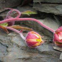 Жертва камнепада :: Денис Антонов