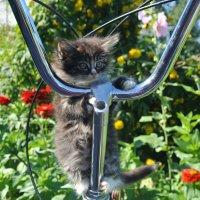 """""""Ехали медведи на велосипеде, а за  ними кот задом наперед..."""" :: neliubow ---"""