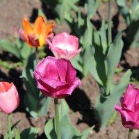 Цветы :: Larissa1425 M
