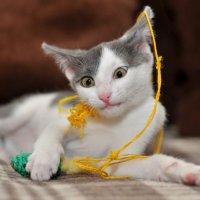 Кошки бывают разные... :: Asya Piskunova
