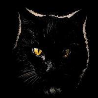 Портрет черного кота :: tankist Алексей