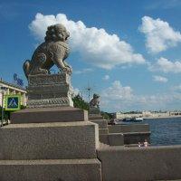 Шимзы с Петровской  набережной :: Виктор Елисеев