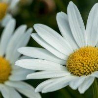 Цветы :: Александр Богданов