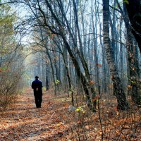 Разговор с осенью :: Геннадий Храмцов