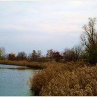 Осенняя речка... :: Тамара (st.tamara)