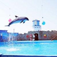 Полет дельфина)) :: Александр Макеенков
