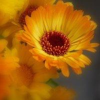 Цветы-цветочки:) :: анна нестерова