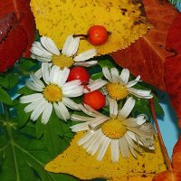 я рисую осень :: Lena