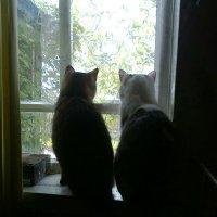 Дружно сидим, в окошко глядим :: Любовь Игнатова