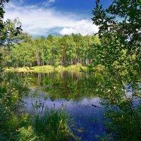 Озеро в лесу. :: Сергей Адигамов