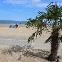Пляж,  Море,  Пальмы, Юрмала... :: Mariya laimite