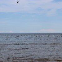 Чайки :: Mariya laimite