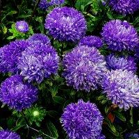 Осенние цветы Фото №5 :: Владимир Бровко