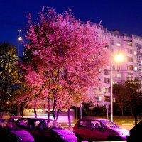 Розовый вечер. :: Larisa