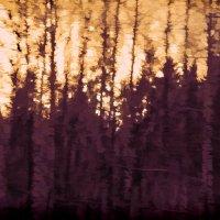 Тихо в лесу... :: Михаил Лобов (drakonmick)