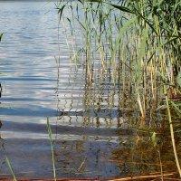 У берега Невы /фрагмент/. :: Фотогруппа Весна.