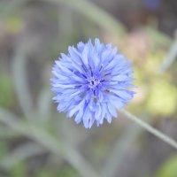 цветочек :: Вика Азарова