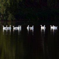 Тёмный  пруд :: Геннадий С.
