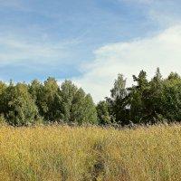 Трропа в лес :: Лидия (naum.lidiya)