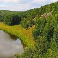 Шуми,шуми зелёный лес... :: Галина Стрельченя