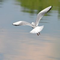 полет :: linnud
