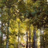 А в лесу не жарко :: Ирина Данилова