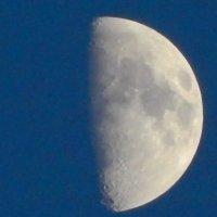 Луна :: Ольга Ольга