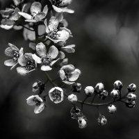 Цветы :: Nn semonov_nn