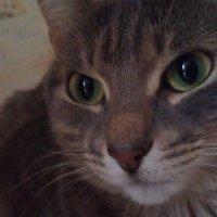 Глаза цвета крыжовника :: Shrewd Helga