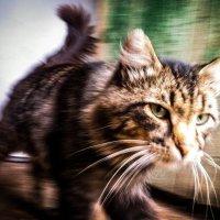 Очередной кот :: Константин Родочинский