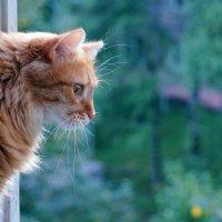 Окно без сетки :: Елена Федотова