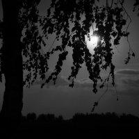 запутанное солнце :: Карина Дудина