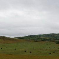 Пейзаж :: Сергей Сол